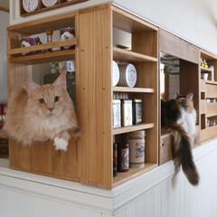 DIY/カフェ/キッチン/収納/ペット/猫/... 対面キッチンのカウンターに合わせて、カフ…