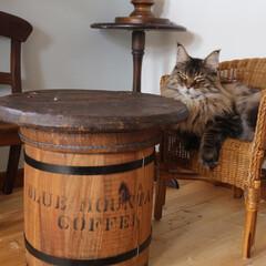 リメイク/コーヒー樽/テーブル/インテリア/猫/アンティーク/... コーヒー樽をテーブルにリメイクしました。…