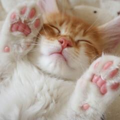 ペット/猫/メインクーン/肉球 ヘソ天で寝ているきゅーちゃん。 にっこり…