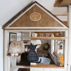 ペット/猫/メインクーン/キャットハウス/カフェ風/DIY/... 手作りキャットハウス(大)のカフェコーナ…