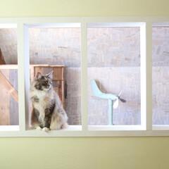 セルフリフォーム/壁/セルフリノベーション/室内窓/間仕切り壁/DIY/... 部屋を完全に仕切っていた壁の石膏ボードを…