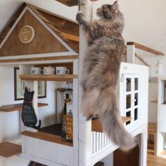 ペット/猫/キャットタワー/キャットハウス/DIY/小屋/... りんごは木登りが大好き! カフェ風の小屋…