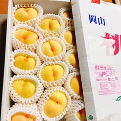 季節の果物/チワワ/空🐶/友達に感謝/岡山の白桃 岡山から白桃🍑が届いた〜(≧∇≦)  何…