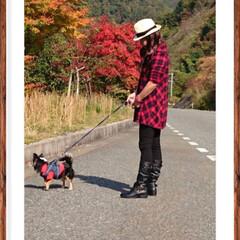 県境/空🐶/旅行/秋/風景/ペット/... 広島県と島根県の県境の紅葉🍁  やっぱり…