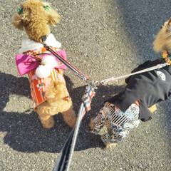 あけおめ/フォロー大歓迎/ペット/ペット仲間募集/犬/わんこ同好会/... 新年初散歩お天気も良くて暖かいお正月です…