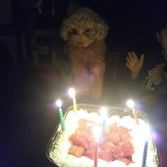 誕生日ケーキ/コストコ/フォロー大歓迎/ペット/ペット仲間募集/犬/... 1月3日ココちゃん6歳のお誕生日でした🎂…