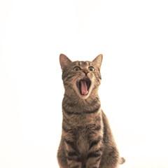 ネコ/猫/ねこ/梅雨/ペット/インテリア/... しばらく猫写真が続きますがご了承ください…(1枚目)