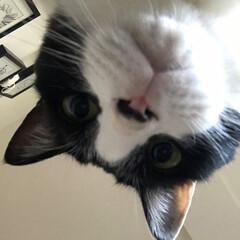 猫/ハチワレ/白黒猫/虎徹/LIMIAペット同好会/にゃんこ同好会 母ちゃん、起きてみてはいかがですかにゃ?…(2枚目)