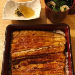 白焼き/鰻重/横浜/鰻/夏の思い出/外食/... 夏といえば鰻。夏は鰻をたくさん食べます。…(4枚目)