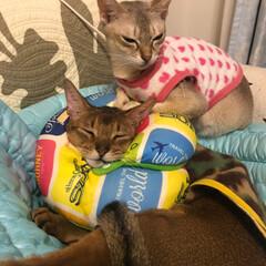 猫/ネコ ラムが心配してるのかな?と思ったけど、い…