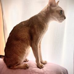 猫 ネコ 風邪を引いてからちょっと痩せました🙀たべ…(1枚目)