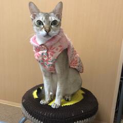 猫 ネコ/リミアの冬暮らし 順番待ち。お姉ちゃんはエライ!