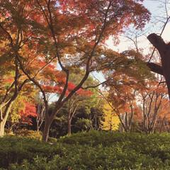 風景 職場の近くの公園です。秋🍁ですね〜
