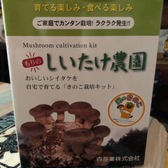 育てる楽しみ・食べる楽しみ/キノコ栽培キット/しいたけ農園 この寒い時期でも カンタン栽培できる で…