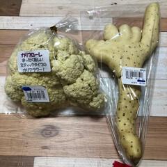カリフラワー/手芋/土佐文旦/フード 昨日、椎茸収穫前に、近くのスーパーにへ …