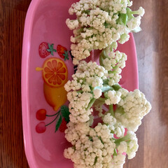 カリフローレ/地域野菜/おでかけ/フード カリフラワーは、生で食べるのが一番😋 ス…