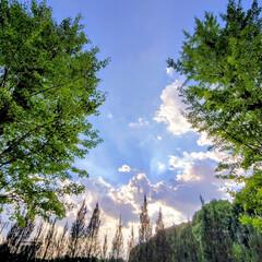 空/風景 🌺🍹🐊🍉🌴🌻🌴🍍  🌴🦩今日の夕方の空で…(1枚目)