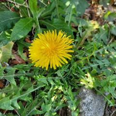 ガーデン/Flower 🌴🌺⛱🌼🐠🌴💓  こんにちは(*´ω`*…