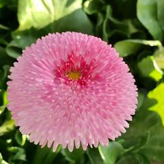 ガーデン/Flower 🌈🌴🌺🦚🐠🌴💓  🍃🦩💕kawaii〜(…