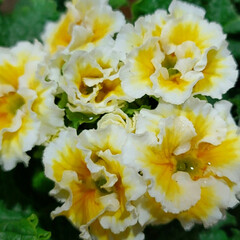 Flower/ガーデン 🌴🌺⛱🌼🐠🌴💓  ٩(๑´0`๑)۶ お…