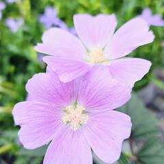 ガーデン/Flower 🌺🍹🐊🍉🌴🌻🌴🍍  🌴🦩薄いピンク🍃🌸k…(1枚目)