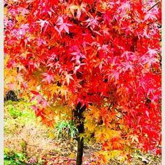 紅葉/ガーデン 🌈🌴🌺🦚🍂🍁🌾🍄٩(*´︶`*)۶おはよ…