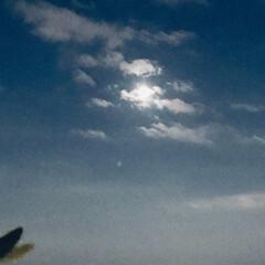 空/月 🌈🌴🦚🌺🍂🍁🌾🍄  今日の🌛*゜