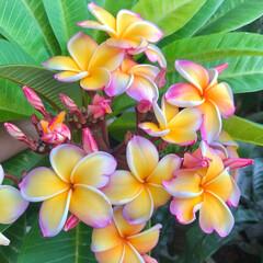 ベランダガーデン/flowers 🌈🌴🌺💫🍂🍁🌾🍄٩(*´︶`*)۶おはよ…