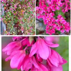 風景/道の駅/Flower 🌈🌴🌺🦚🍂🍁🌾🍄こんばんは(*^▽^*)…