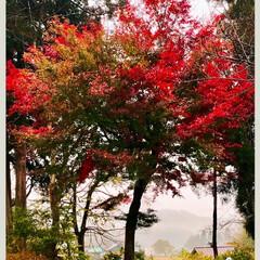 風景 🌈🌴🌺🦚🍂🍁🌾🍄  ❤️まだ紅葉途中っぽ…