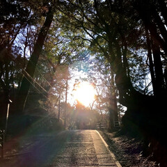 高尾山 🌈🌴🌺🦚🐠🌴💓  高尾山頂上に行く途中の…