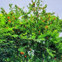 ガーデン/Flower 🌺🍹🐊🍉🌴🌻🌴🍍  🌴🦩濃い緑🌿に🧡映え…(3枚目)