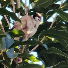 ガーデン/動物 🌋🌴🌊🌺🌈🐠🌴💓  🌴🦩いつも🌳の中で雀…