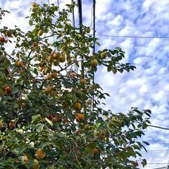 ガーデン 🌈🌴🦚🌺🍂🍁🌾🍄  大きい柿が🍊🍊🍊🍊🍊…