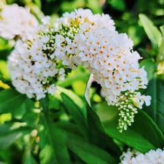 ガーデン/Flower 🌺🍹🐊🍉🌴🌻🌴🍍  ٩(*´︶`*)۶お…(1枚目)