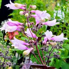 ガーデン/Flower 🌺🍹🐊🍉🌴🌻🌴🍍 ٩(*´︶`*)۶おは…(1枚目)