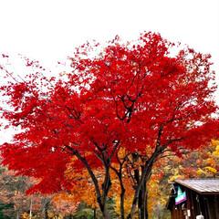 紅葉/風景 🌈🌴🌺🦚🍂🍁🌾🍄  🍁🍂新潟の紅葉 の一…