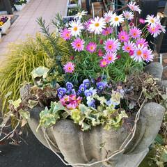 ガーデン/Flower 🌈🌴🌺🦚🐠🌴💓  kawaii盛り花〜で…