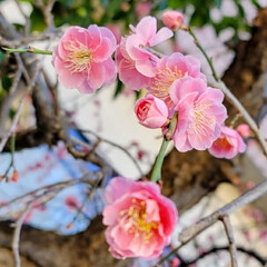 Flower/風景/ガーデン 🌴🌺⛱🌼🐠🌴💓  🌸ウメ🌸