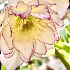 ガーデン/Flower 🌈🌴🌺🦚🐠🌴💓  ٩(*´︶`*)۶おは…