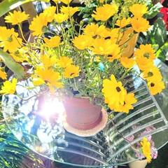 ベランダガーデン/Flower 🌋🌴🌊🌺🌈🍃🌸🐝🌸🍃  🌴🦩いい天気です…(1枚目)