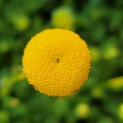 ガーデン/Flower 🌴🌺⛱🌼🐠🌴💓  🍃💛🍃ハナホタル🍃💛🍃