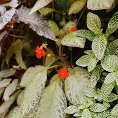 ガーデン/Flower 🌈🌺🐢💃🌴🌻🌴🍍  🇧🇷ブラジル方面で見…(1枚目)