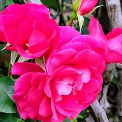 ガーデン/Flower 🌈🌺🐢💃🌴🌻🌴🍍  ٩(*´︶`*)۶お…(1枚目)