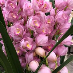 Flower/スクール 🌈🌴🌺🦚🐠🌴💓  スクール🎾に飾ってあっ…