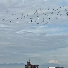 富士山 🌈🌴🦚🌺🍂🍁🌾🍄  今日は富士山方向にも…