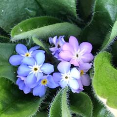 ガーデン/Flower 🌈🌴🌺🦚🐠🌴💓  🌴🦩神秘的な色です〜💙…