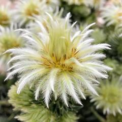 Flower/ガーデン 🌴🌺⛱🌼🐠🌴💓  もふもふで(´,,•ω…