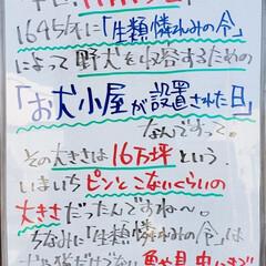 日本史/歴史/生類憐れみの令/A型看板/今日は何の日/ホワイトボード/... おはようございます! 本日のホワイトボー…