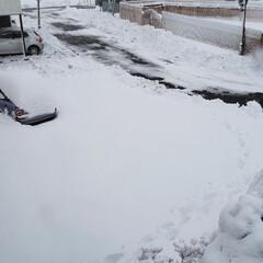 まだまだ冬/標茶/道東/雪/ひらた家具店 昨夜から降った雪で、今朝はこんな感じでご…